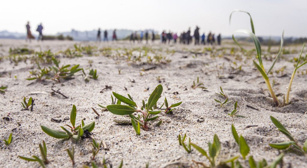 Small plants growing on the sand dunes